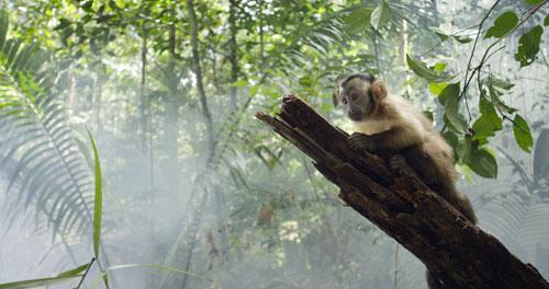 recensie Amazonia 3D