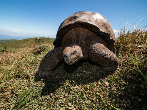 Galápagos: Hope for the Future