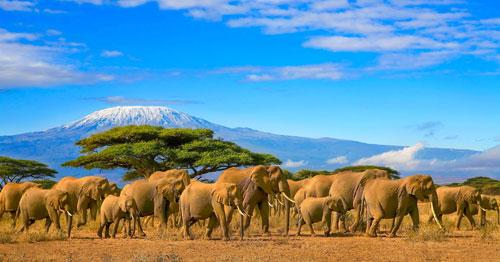 Elephants Up Close